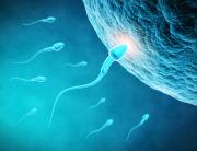 Tìm ra phương pháp chữa bệnh vô sinh bằng tinh trùng nhân tạo