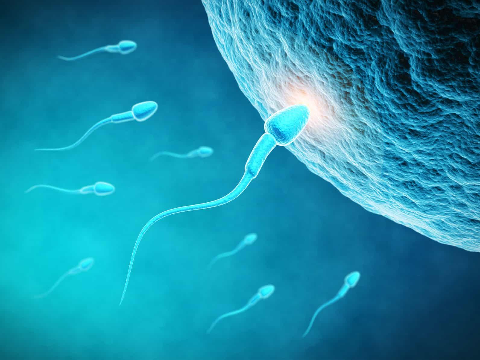 Nghiên cứu chữa bệnh vô sinh bằng tinh trùng nhân tạo