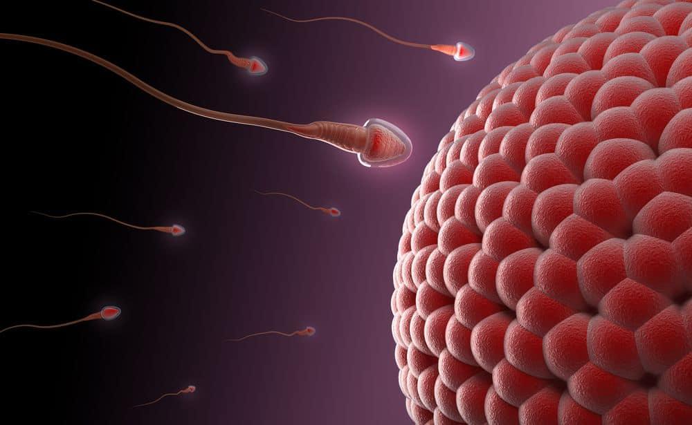 Tìm ra phương pháp điều trị vô sinh ứng dụng tế bào gốc