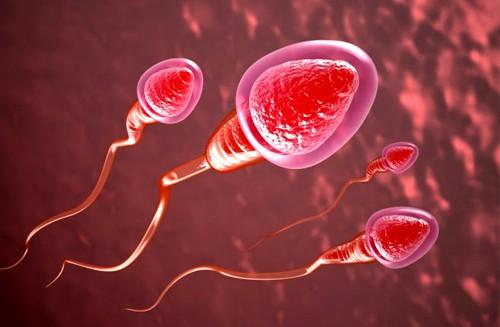 Những điều nam giới cần biết về tinh trùng