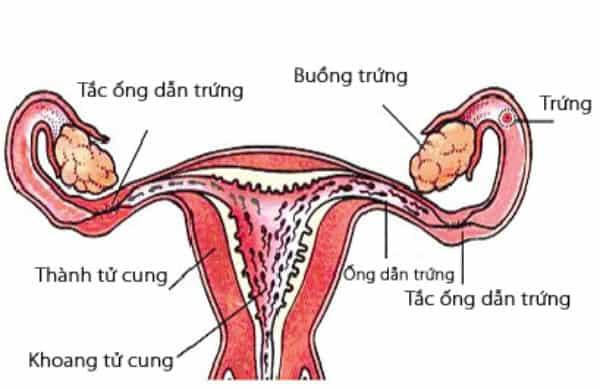 cac-phuong-phap-thong-tac-voi-trung-1