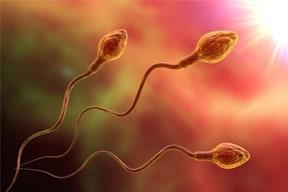 Kháng thể kháng tinh trùng trong miễn dịch sinh sản ở nam giới