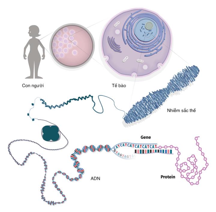 bố mẹ bình thường sinh con mắc bệnh do bất thường di truyền
